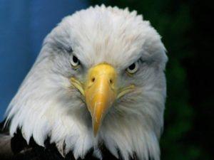 Le rêve d'aigle et sa signification: