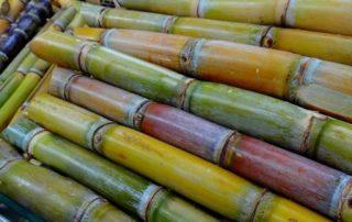 Rêve de canne à sucre