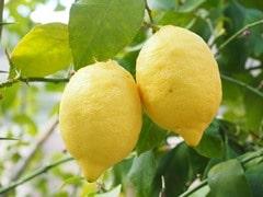 Rêver de citron en islam