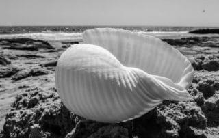 Rêver de coquillages blancs