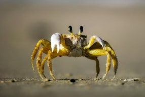 Rêver de crabe en islam