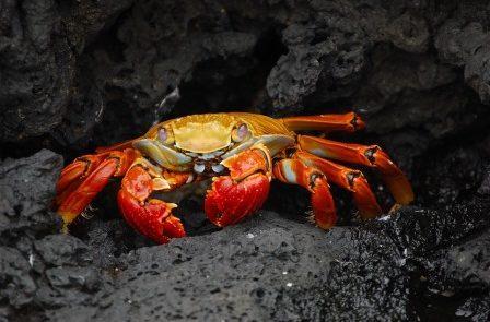 Rêver de crabe interprétation exacte