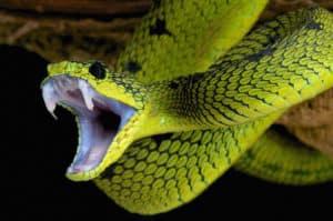 Significations du rêve d'une attaque de serpents :