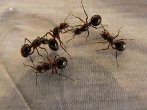 Rêver de fourmis et sa signification: