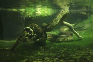 Significations du rêve de serpents dans l'eau:
