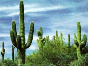 Rêver de cactus et sa signification:
