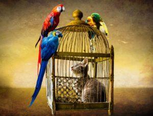 Rêver de cage et sa signification: