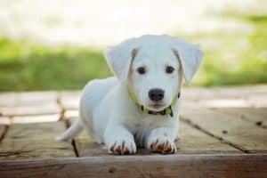Rêver de chien et son interprétation: