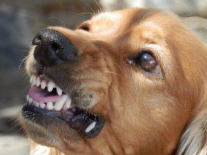 Rêver de morsures de morsures de chien et son interprétation: