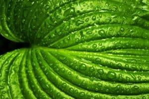 Rêver de vert et son interprétation: