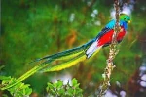 Rêver de quetzal et son interprétation: