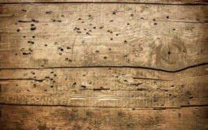Rêver de termite et son interprétation: