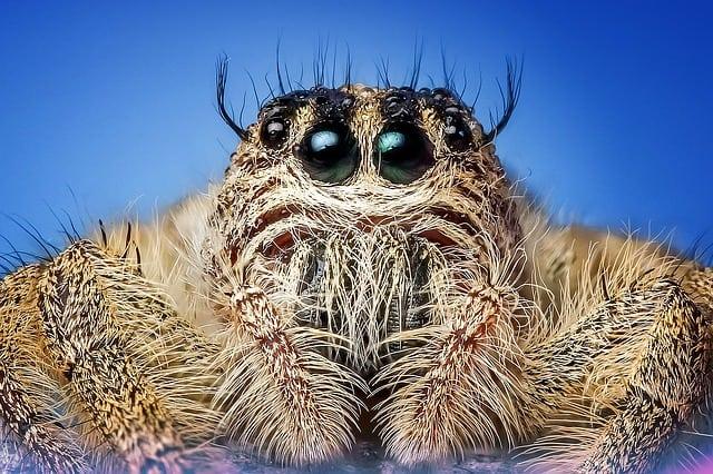 Symbole du rêve d'araignée: