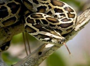 Cauchemars de serpent: