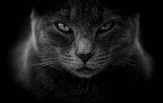 Rêver de chat noir et son interprétation:
