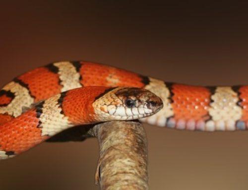 La signification des rêves de serpent