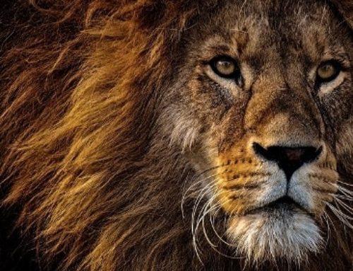 10 animaux symboles de force dans les rêves