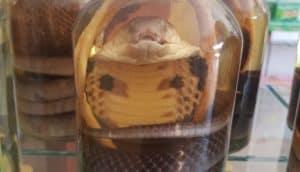 Le rêve de tuer un serpent et sa signification: