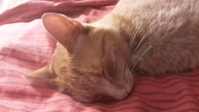 Que signifie un rêve de chat mort ?
