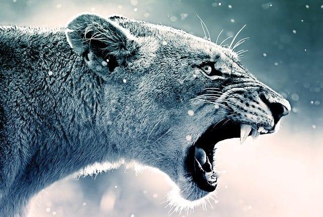 Que signifie rêver de lion agressif ?